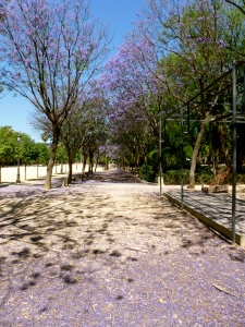 Fragrant purple blossoms litter the ground in Prado de San Sebastian